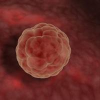 Basic Biology Of Fetal Development